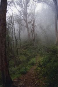 Misty walk to Dibbins Hut (Peter) - 49.jpg