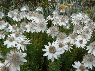 Wildflowers. - P1070406.JPG