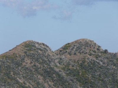 Mt. Mam Mary (Razorback). - P1070425.JPG