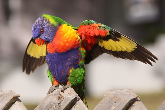 True Colours - IMG_1726 crp.jpg