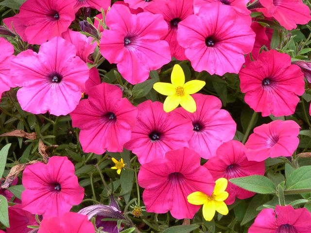 Fleur - P1030105.JPG