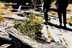 Ruins of Traces Hut 1995 - Traces_Hut_Ruin1995.jpg